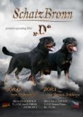 Rotvajler štěně - pejsek rottweilera s PP