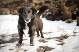 MÍŠA - kříženec 20 kg - pes 9 let