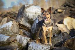 CODY - kříženec 15 kg - kastrovaný pes 1 rok