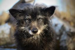 BOBÍČEK - kříženec 7 kg - pes cca 12 let