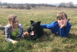 CASPER - Border kolie x kříženec - štěně, pes 11 m