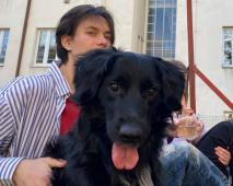 ARKAS - kolie x kříženec 19 kg - pes 5 let