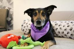 BERRY - kříženec 25 kg - kastrovaný pes 10 let