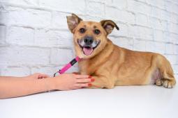 ROMEO - kříženec 18 kg - kastrovaný pes cca 10 let