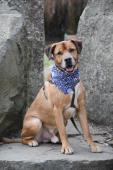 LORD - kříženec 34 kg - kastrovaný pes 10 let