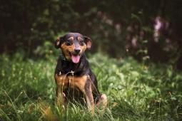 MAXÍK - kříženec 7 kg - kastrovaný pes 8 let