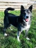 OTTO - kříženec 20 kg - kastrovaný pes 4 roky
