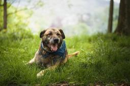 CHUCK - kříženec 35 kg - kastrovaný pes 10 let