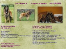 Belgický ovčák Tervueren- prodám