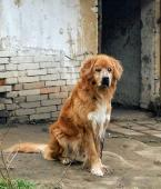 DONEČEK - Kříženec - pes