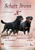 Štěňata rotvajlera s PP - Rottweiler (RTW) - štěně
