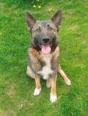 DASTY - kříženec 17 kg - kastrovaný pes 1,5 roku