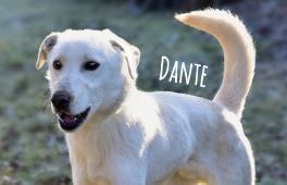 Dante, zlomená dušička