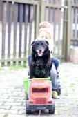 ŠTĚPÁNEK - kříženec 14 kg - kastrovaný pes 7 let