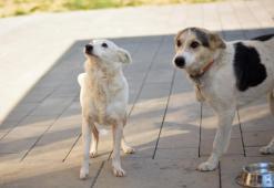 Bella a Bročko hľadajú domov