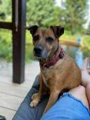 ŤAPINKA - kříženec 16 kg - fena 6 let