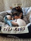 Lili Roos