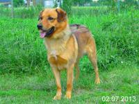 ALTAR - kříženec - pes