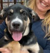 ELIZA - kříženec - štěně, fena 4,5 měsíce
