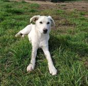 ŠTĚNĚCÍ TRIO - kříženec - štěně 4,5 měsíce