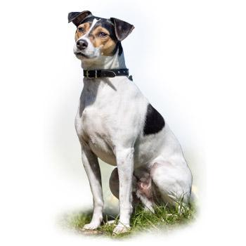 Dánsko-švédský farmářský pes