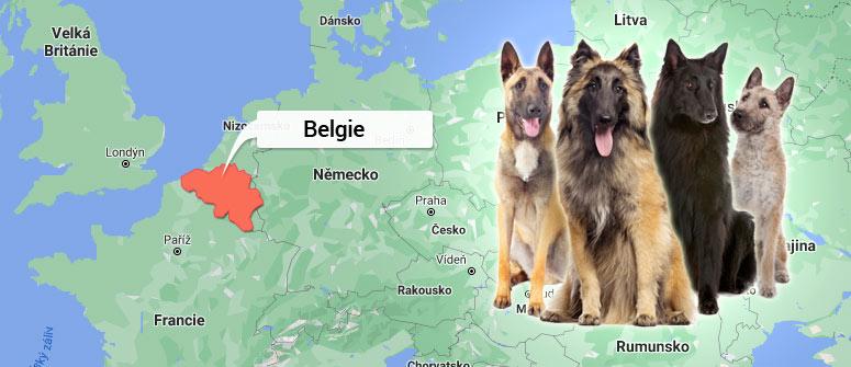 Belgie - Belgický ovčák