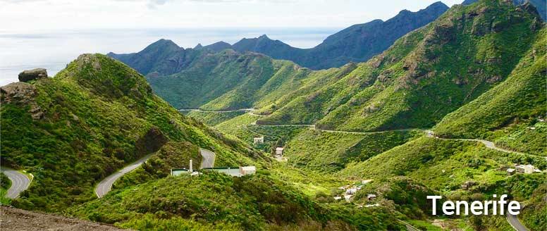 Kanárský podenco - Tenerife