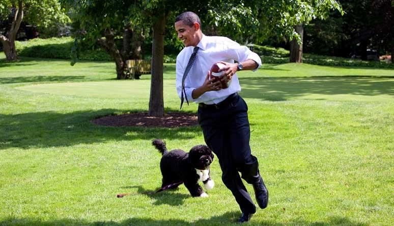 Portugalský vodní pes - Barack Obama