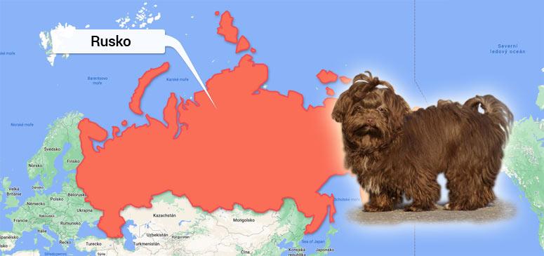 Ruská barevná bolonka