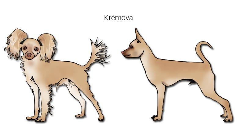 Krémová