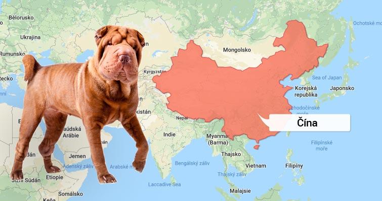Šarpej - Čína