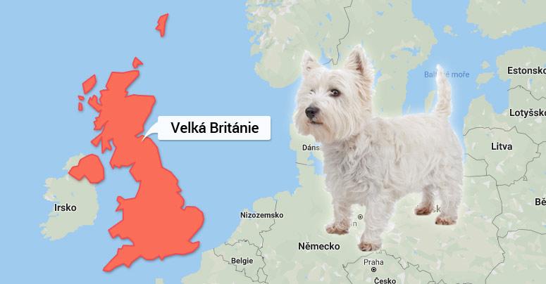 West Highland White Terrier - Velká Británie