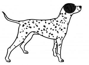Kresba dalmatina s černou plotnou