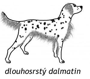 Dlouhosrstá forma dalmatina