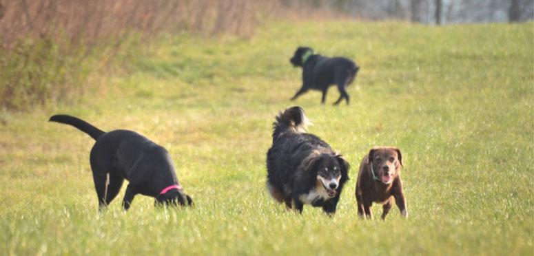 Psi krmeni BARFem