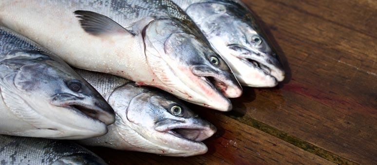Čerstvá ryba je ideální na BARFování